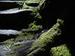 桑の木の滝_Phase-One-P30+_yaotomiお写ん歩_13.jpg