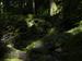 桑の木の滝_Phase-One-P30+_yaotomiお写ん歩_5.jpg