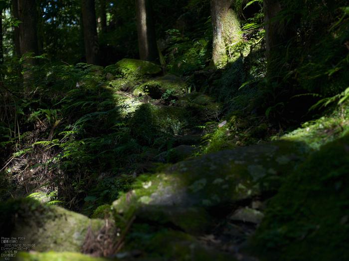 桑の木の滝_Phase-One-P30+_yaotomiお写ん歩_5s.jpg