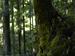 桑の木の滝_Phase-One-P30+_yaotomiお写ん歩_6.jpg