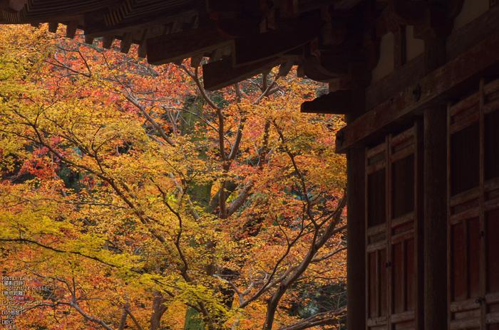 室生寺紅葉(2)_2012yaotomi_13.jpg