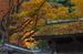 室生寺紅葉(2)_2012yaotomi_2.jpg