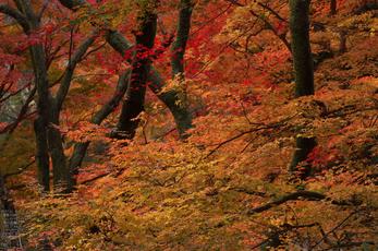 室生寺紅葉(2)_2012yaotomi_20.jpg