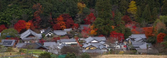 室生寺紅葉(2)_2012yaotomi_31.jpg