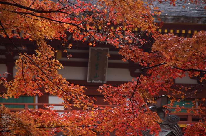 室生寺_紅葉2012_yaotomi_37s.jpg