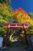 談山神社・紅葉_2012yaotomi_2.jpg