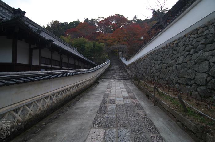 長谷寺_紅葉2012_yaotomi_3s.jpg