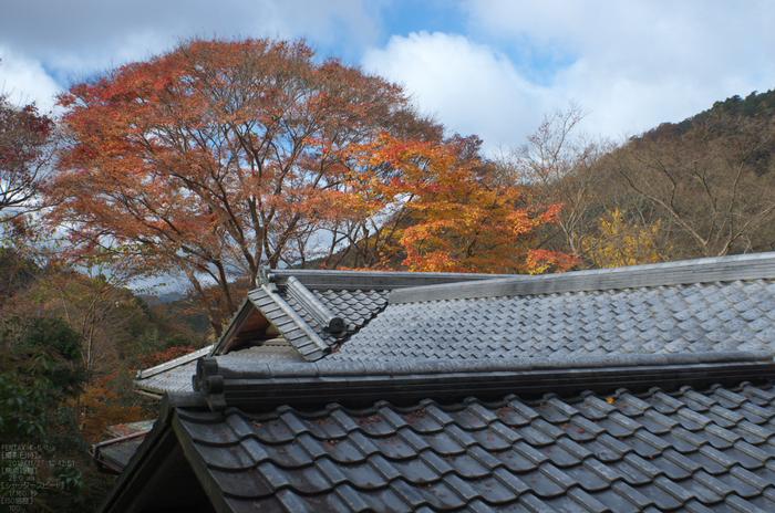 瑠璃光院紅葉_2012yaotomi_17.jpg