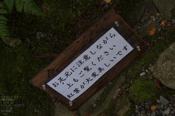 瑠璃光院紅葉_2012yaotomi_3.jpg