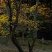 PhaseOne_P20_奈良東大寺_201212yaotomi_16.jpg