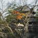 PhaseOne_P20_奈良東大寺_201212yaotomi_31.jpg