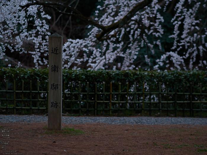 京都御苑近衞邸跡_桜_yaotomi2013_13s.jpg