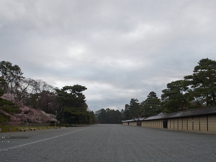 京都御苑近衞邸跡_桜_yaotomi2013_21s.jpg