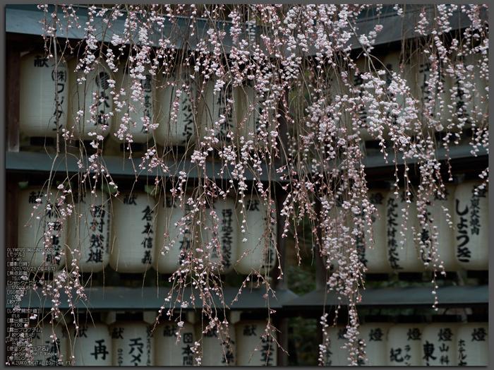 大石神社_しだれ桜_2013yaotomi_1st.jpg