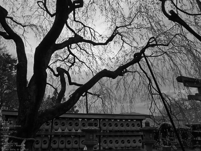 大石神社_しだれ桜_2013yaotomi_7s.jpg