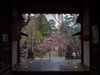氷室神社・桜_2013yaotomi_12s.jpg