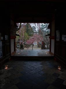 氷室神社・桜_2013yaotomi_16s.jpg