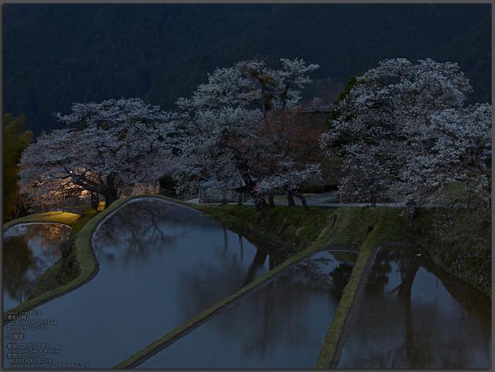 三多気の桜_2013yaotomi_1st.jpg