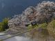 三多気の桜_2013yaotomi_8f.jpg