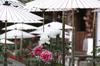 乙訓寺の牡丹_2013yaotomi_8f.jpg