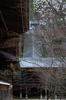 光明寺の桜_2013yaotomi_20s.jpg