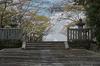 光明寺の桜_2013yaotomi_6s.jpg