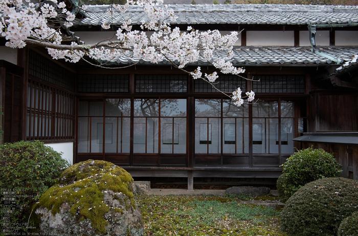 勝持寺(花の寺)の桜_2013yaotomi_13s.jpg