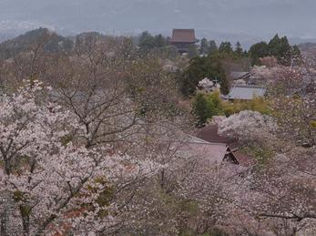 吉野山(下千本)_2013yaotomi_10s.jpg