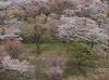 吉野山(下千本)_2013yaotomi_15f.jpg