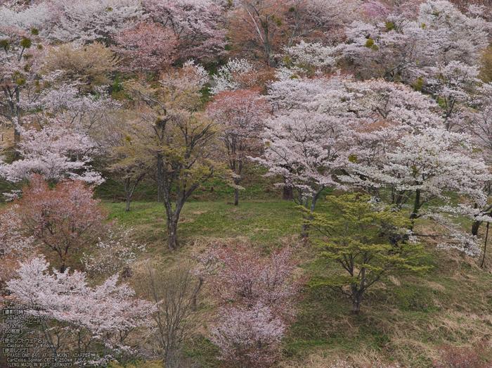 吉野山(下千本)_2013yaotomi_15s.jpg