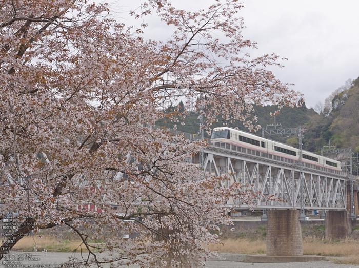 吉野山(下千本)_2013yaotomi_16s.jpg