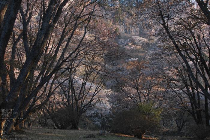 屏風岩公園の桜(SD1m)_2013yaotomi_10s.jpg