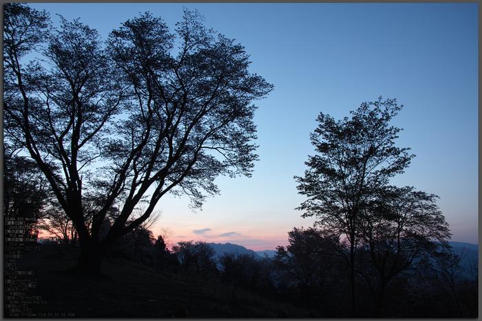 屏風岩公園の桜(SD1m)_2013yaotomi_1st.jpg