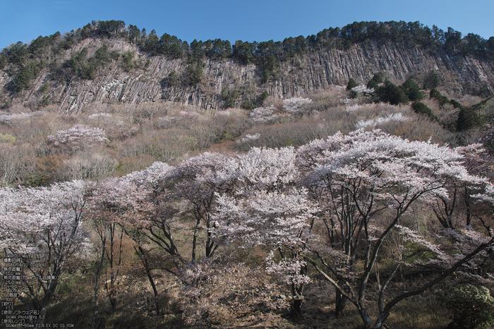 屏風岩公園の桜(SD1m)_2013yaotomi_25s.jpg