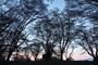 屏風岩公園の桜(SD1m)_2013yaotomi_2f.jpg