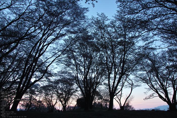 屏風岩公園の桜(SD1m)_2013yaotomi_2s.jpg