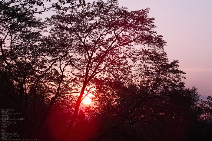 屏風岩公園の桜(SD1m)_2013yaotomi_5s.jpg