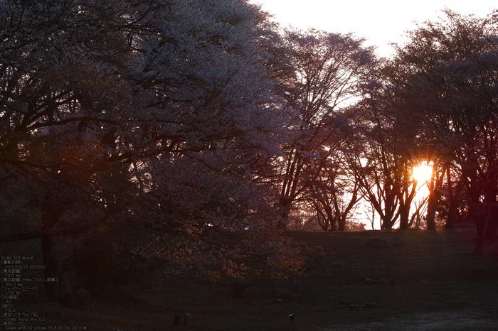 屏風岩公園の桜(SD1m)_2013yaotomi_6s.jpg