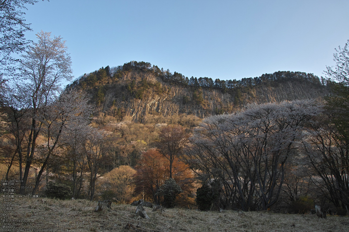 屏風岩公園の桜(SD1m)_2013yaotomi_8s.jpg