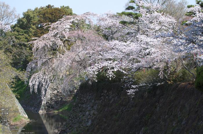 郡山城跡_桜_2013yaotomi_16s.jpg