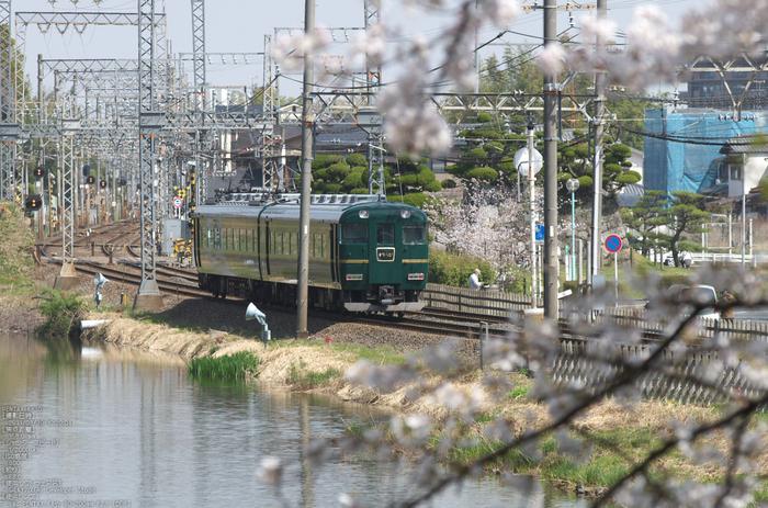 郡山城跡_桜_2013yaotomi_28s.jpg