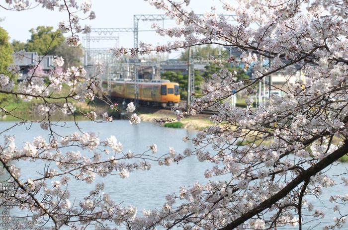 郡山城跡_桜_2013yaotomi_7s.jpg