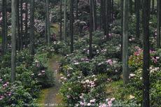 写真散歩会・お写ん歩_20130511yaotomi_11s.jpg
