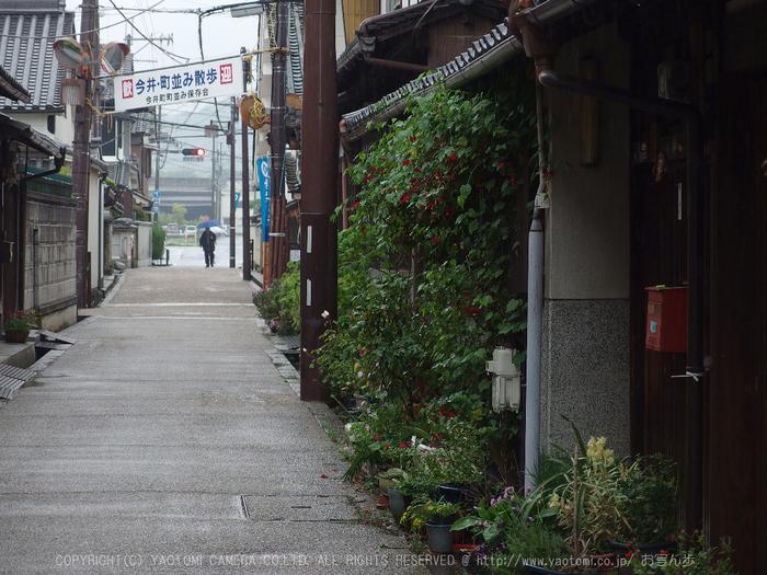 写真散歩会・お写ん歩_20130511yaotomi_151s.jpg