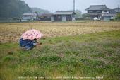 写真散歩会・お写ん歩_20130511yaotomi_157s.jpg