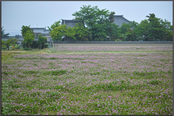写真散歩会・お写ん歩_20130511yaotomi_161st.jpg