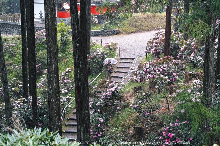 写真散歩会・お写ん歩_20130511yaotomi_17s.jpg