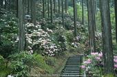 写真散歩会・お写ん歩_20130511yaotomi_8s.jpg