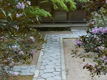 室生寺の石楠花_2013yaotomi_10s.jpg