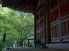 室生寺の石楠花_2013yaotomi_17f.jpg